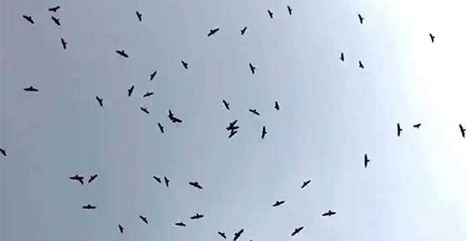Aguilas cuaresmeras
