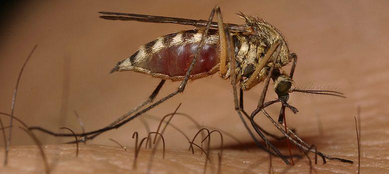Ibagué cerró el 2020 con 2.764 casos de dengue 1