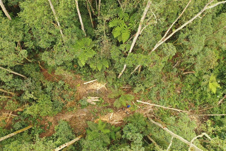 Autoridades sancionarán a las personas involucradas en la tala de árboles en Cajamarca 2