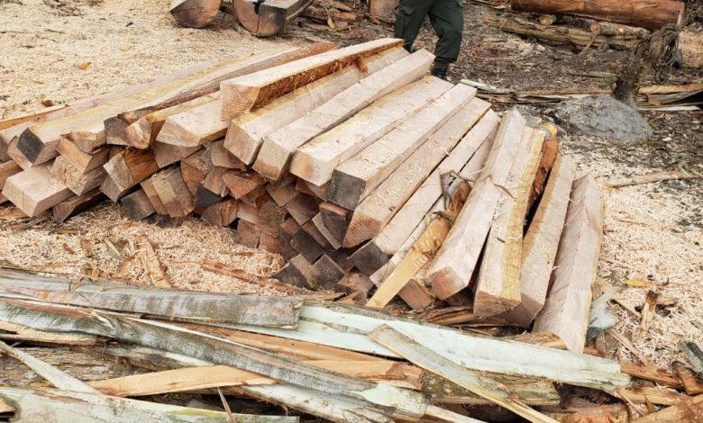 Autoridades sancionarán a las personas involucradas en la tala de árboles en Cajamarca 1