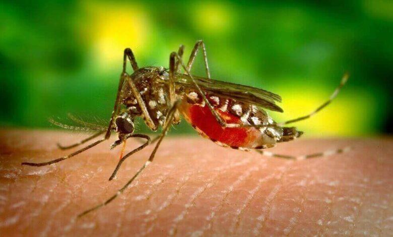Cerca de 600 personas han requerido hospitalización en Ibagué debido al dengue 1