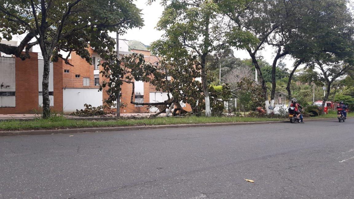 Árboles, peligro inminente en Ibagué 4