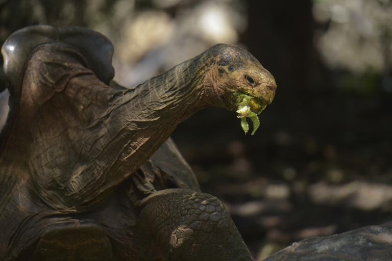 Diego, la tortuga que salvó a su especie, regresa a casa 2