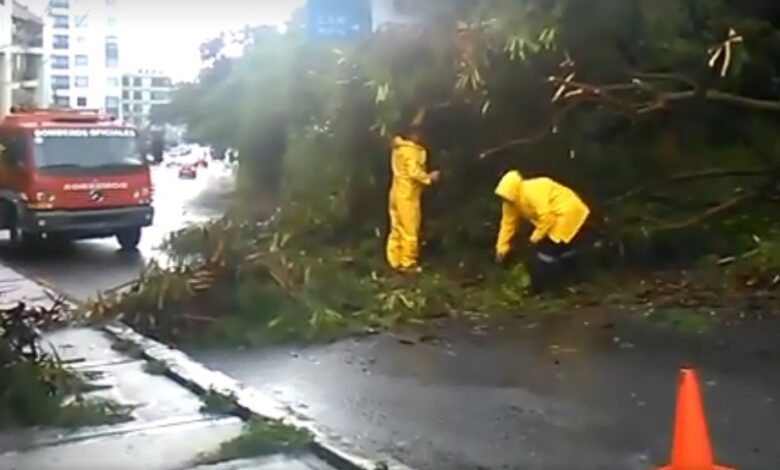 Bomberos atendieron la caída de un árbol en la carrera sexta de Ibagué 1