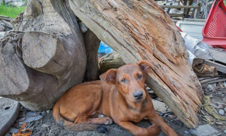 159 mascotas abandonadas durante la cuarentena han sido rescatadas por el CAPA 1