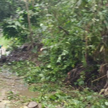 13 veredas afectadas por invierno en el Tolima 9
