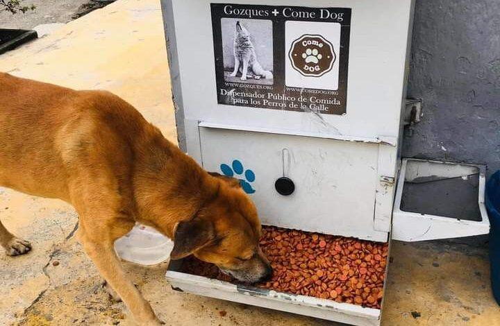 ¿Quieres ayudar a los animales abandonados de la ciudad? Ahora podrás hacerlo con solo $1000 1