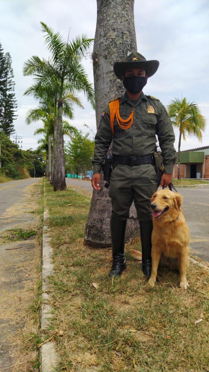 Titán, el perro antinarcóticos que guió incautación de droga 6