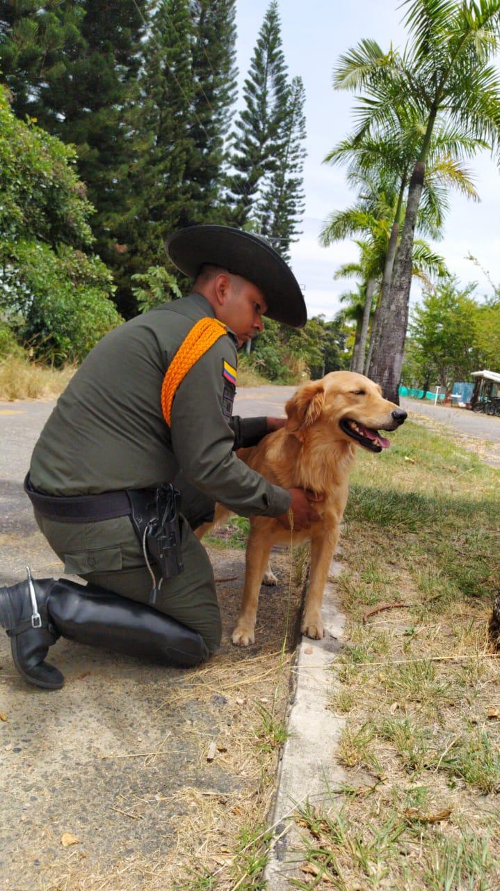 Titán, el perro antinarcóticos que guió incautación de droga 5