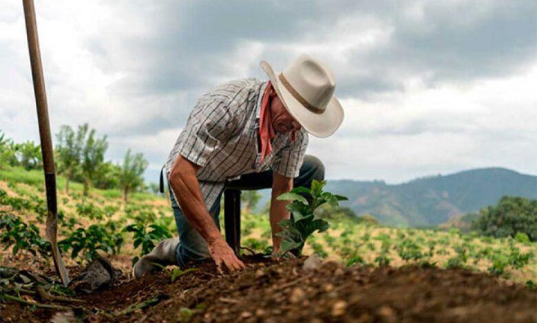 ¿Cuáles son los cultivos que más se sembrarán este primer trimestre en Colombia? 1