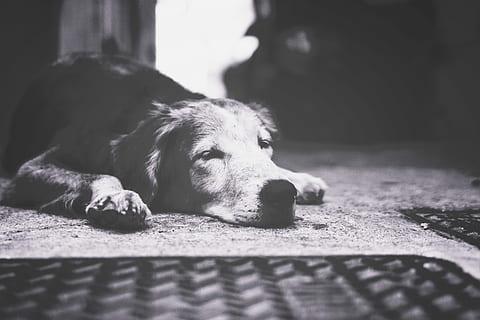Autoridades investigan grave caso de maltrato animal en la comuna Nueve 1