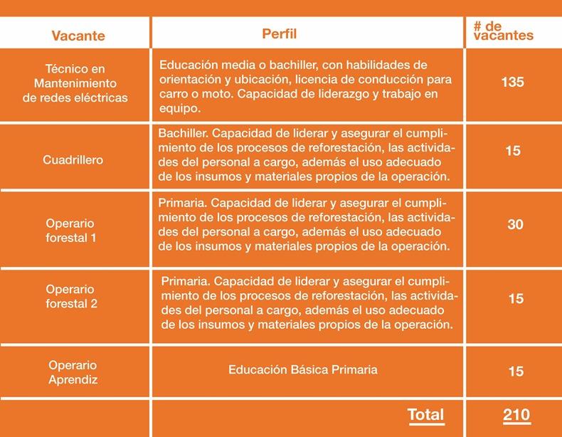 Celsia ofrece 210 empleos en el Tolima 4
