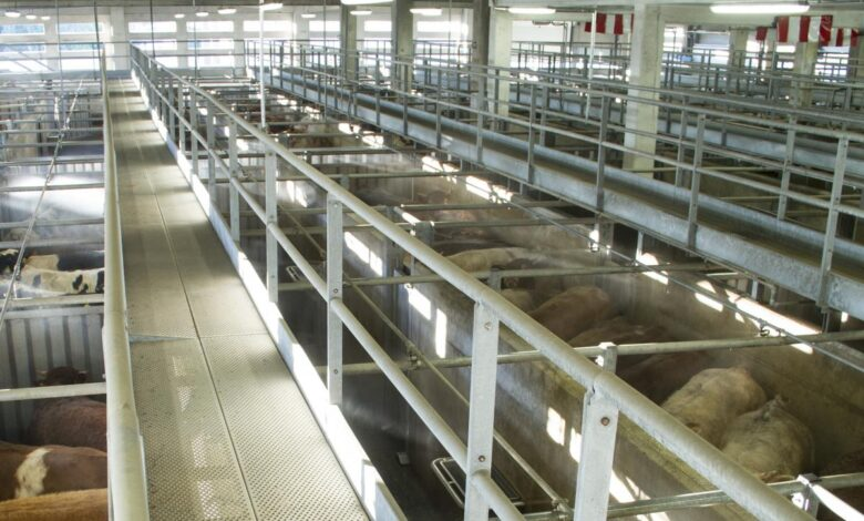 Mataderos del Tolima siguen incumpliendo normas sanitarias 1