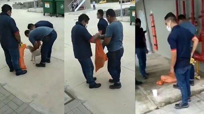 Investigan obreros del Sena en Malambo que sedaron y metieron en bolsas a 4 perros 1