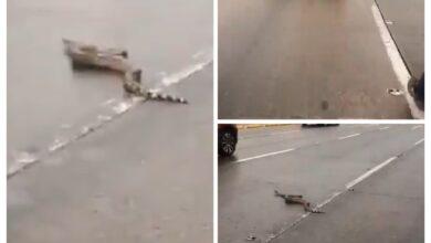 Photo of Serpiente causa pánico al aparecer en medio de una vía en Bogotá