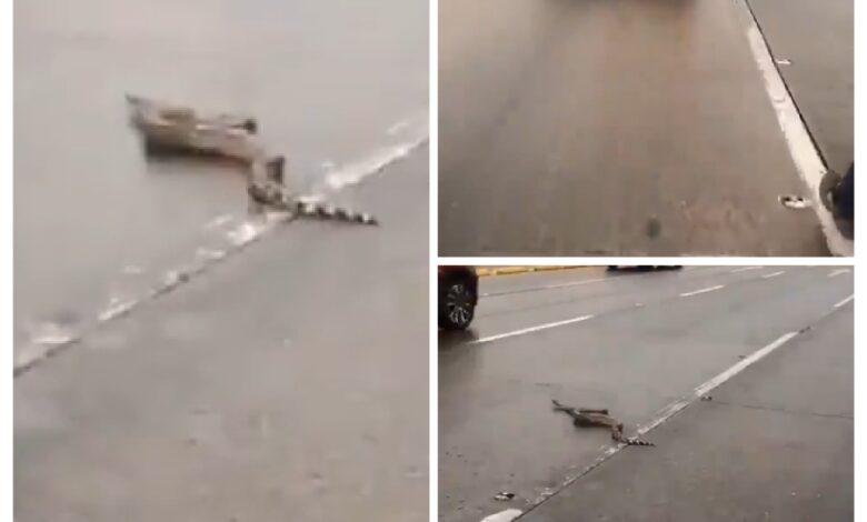 Serpiente causa pánico al aparecer en medio de una vía en Bogotá 1