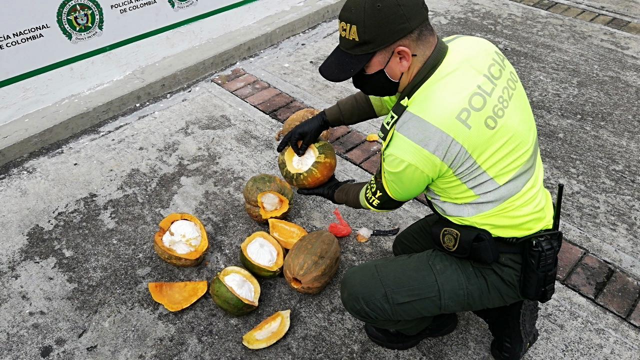 ¿Ahora la cocaína se da en las matas de ahuyama? 2