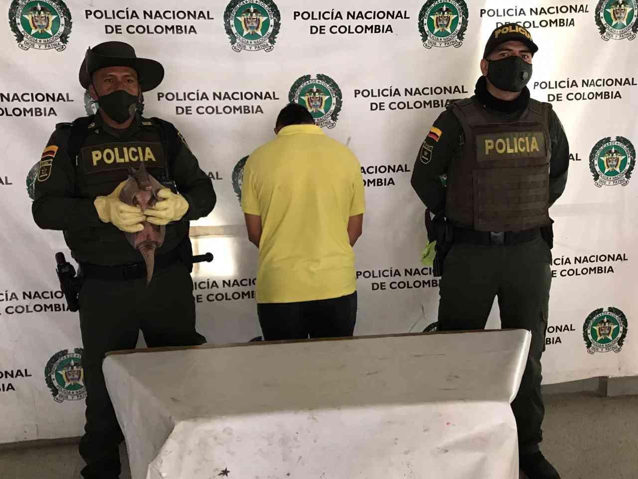 Tráfico de animales en redes sociales aumenta en Colombia 12