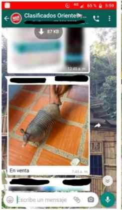Tráfico de animales en redes sociales aumenta en Colombia 10