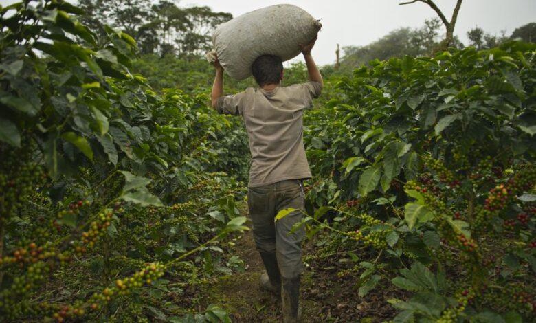 Conozca el proyecto que podría sacar de data crédito a los campesinos en Colombia 1