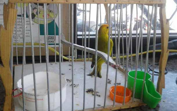 Prohíben venta de animales vivos en plazas de mercado 1