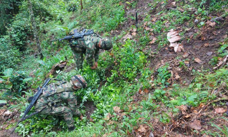 En el municipio de Rioblanco fue hallado un cultivo de coca 1