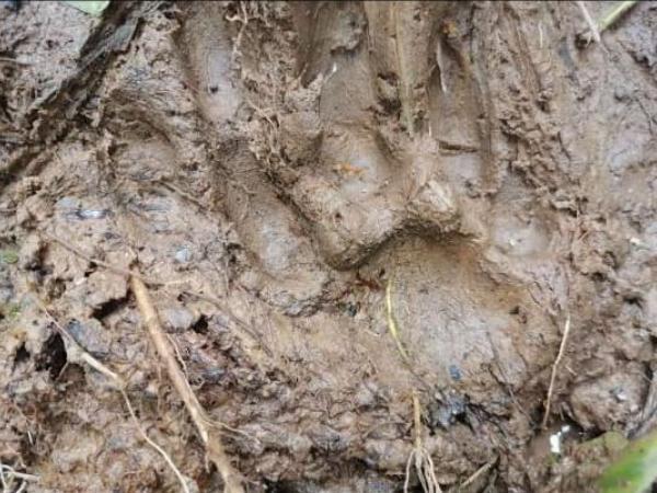 Jaguar asesinó dos indígenas en Boyacá 5