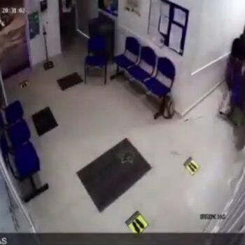 Vaca atacó a pacientes en urgencias de centro asistencial 4