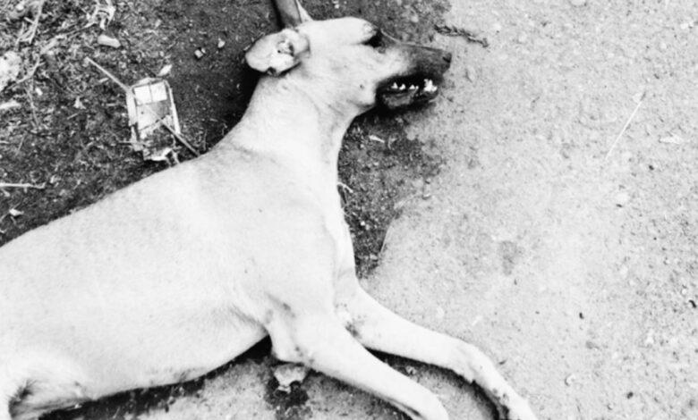 Nuevo caso de maltrato animal en el Tolima, con descargas eléctricas mataron a una perrita 1