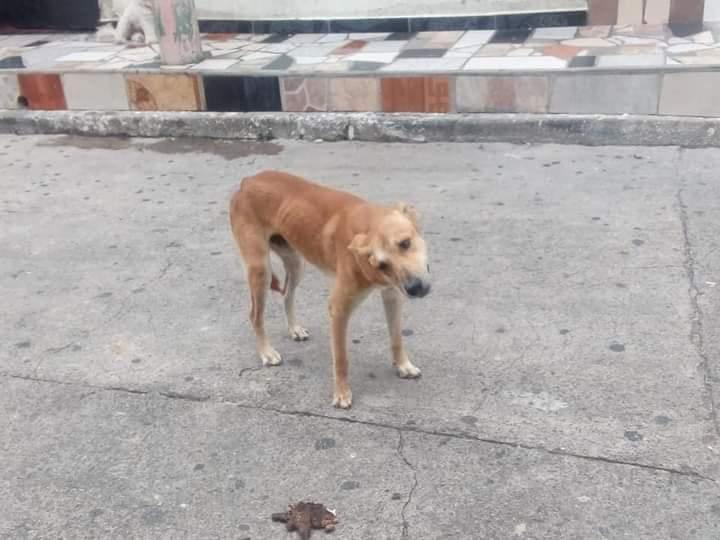 Piden ayudar a 'Cariño' el perrito atropellado en Ibagué 4