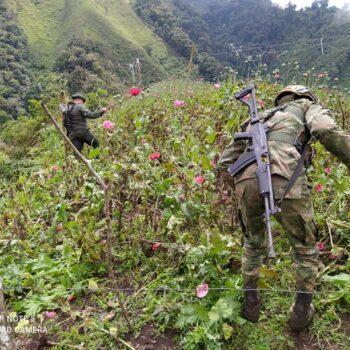 Más de 9.574 metros de cultivos de Amapola erradicados en Anzoátegui 2