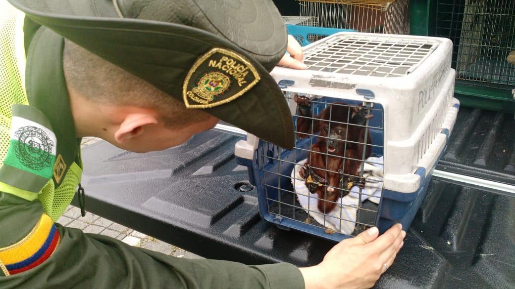 1.200 animales silvestres se salvaron de volverse comidas típicas de Semana Santa 4