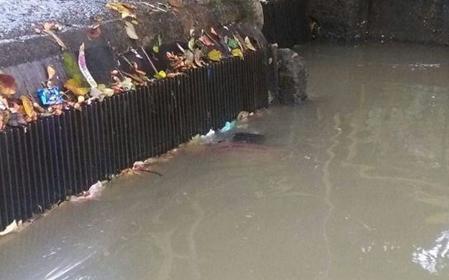 De un hombre de 69 años es el cuerpo encontrado en el Canal de Mirolindo 3
