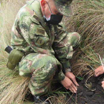 600 frailejones se sembraron en la reserva El Toro del municipio de Murillo 7