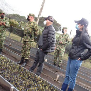 600 frailejones se sembraron en la reserva El Toro del municipio de Murillo 9
