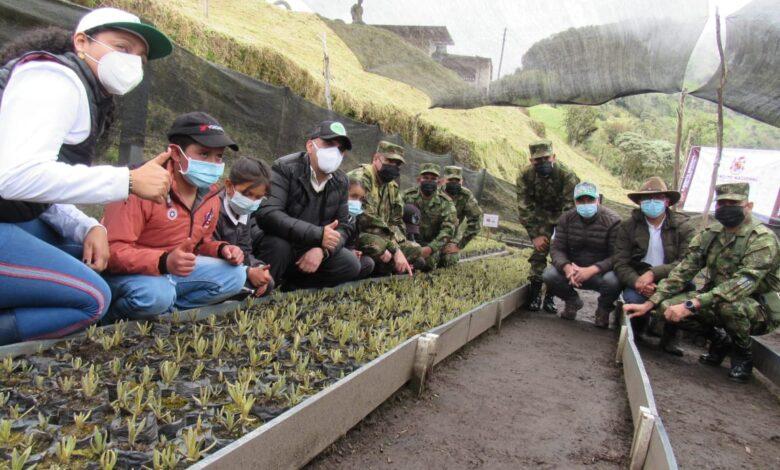 600 frailejones se sembraron en la reserva El Toro del municipio de Murillo 1