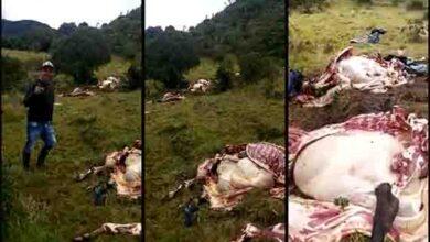 Ladrones de ganado tienen azotados a los campesinos del Alto de la Línea 7