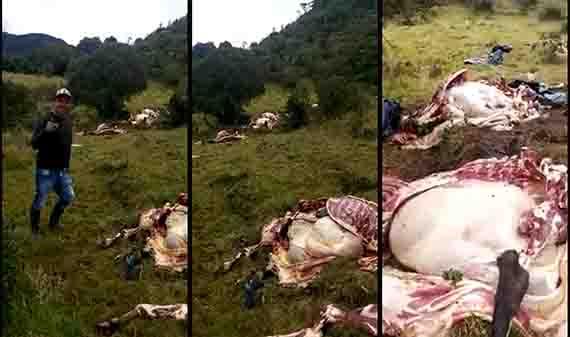 Ladrones de ganado tienen azotados a los campesinos del Alto de la Línea 1