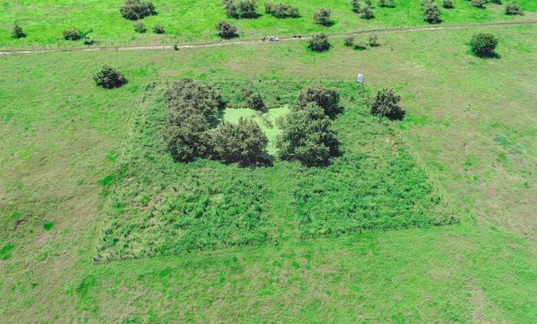 Celsia sembró más de 19 mil árboles en El Espinal 1