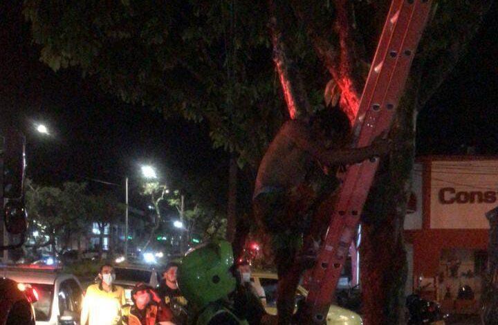 Con escalera Policía tuvo que bajar ladrón que se quería llevar el cableado de semáforo 3