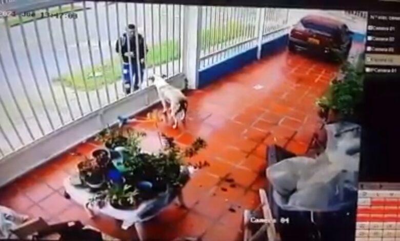 Por venganza le habría lanzado acido a perrito 3