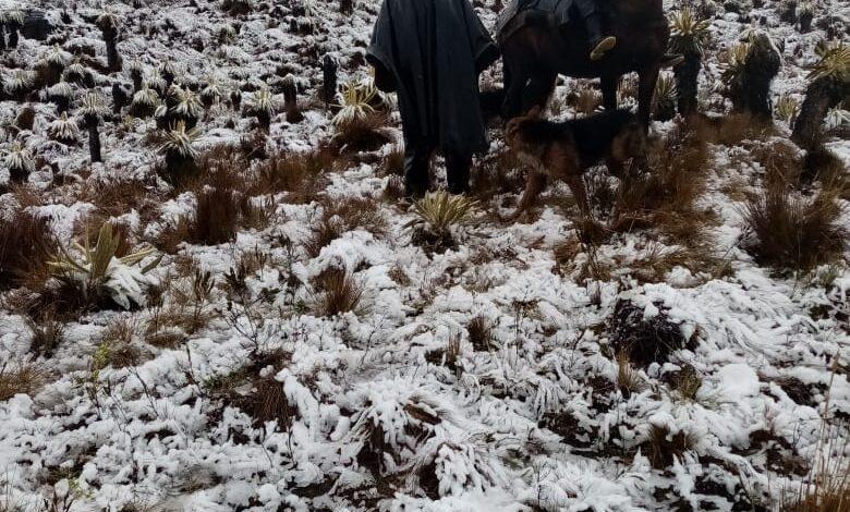 Organismos de socorro, montañistas y arrieros siguen la busqueda de joven perdido en el Nevado del Tolima 3