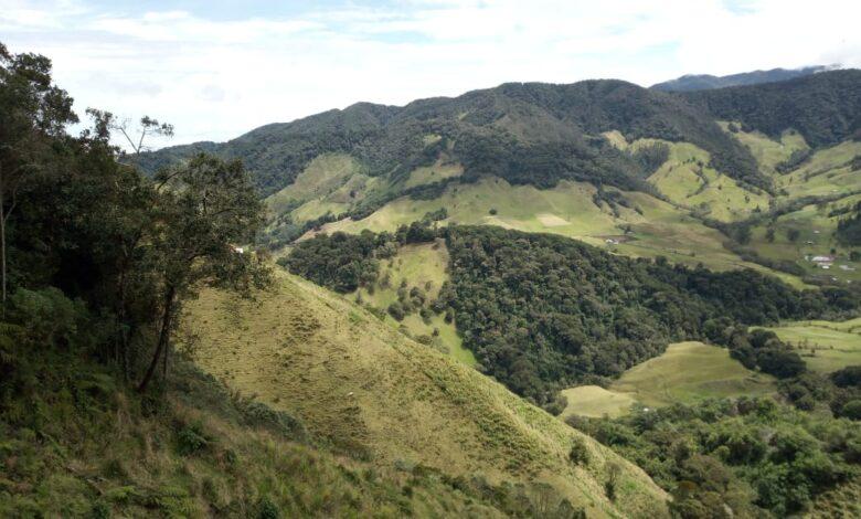Oso Andino camina por la parte alta del río Totaré en el norte del Tolima 3
