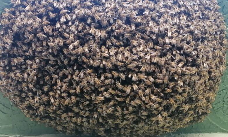 Bomberos del municipio del Líbano le apuestan a la apicultura 1