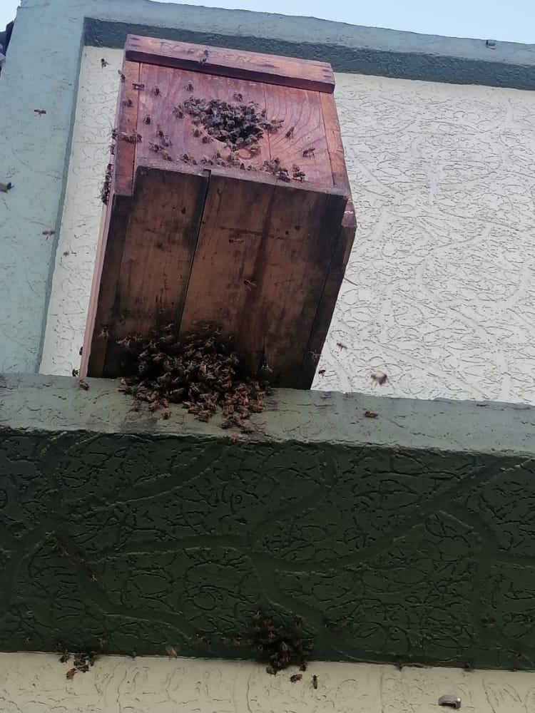 Bomberos del municipio del Líbano le apuestan a la apicultura 4