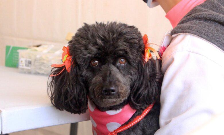 Continúan las jornadas de las jornadas de vacunación de mascotas contra la rabia canina y felina 1